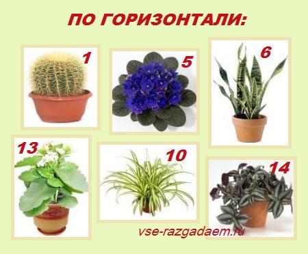 кроссворд комнатные растения
