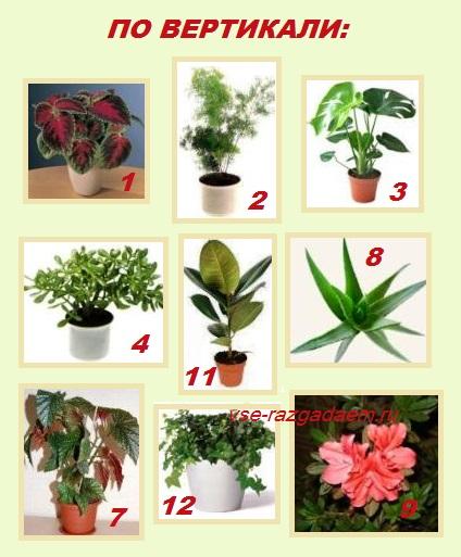 кроссворд в картинках, кроссворд комнатные растения, кроссворд растения, кроссворд
