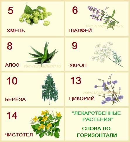 кроссворд лекарственные растения с ответами, кроссворд лекарственные растения, кроссворд на тему лекарственные растения, кроссворд по теме лекарственные растения, кроссворд на тему растения, кроссворд про растения, кроссворд растения
